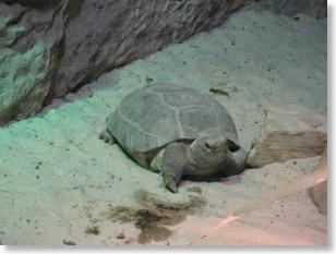 tortoise-300x225