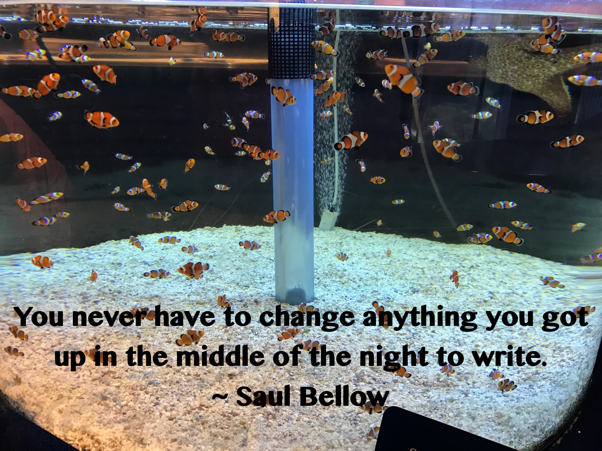 Saul Bellow - Write at Night